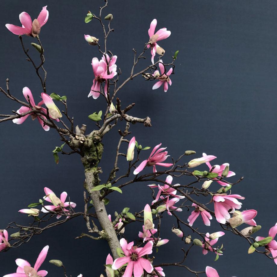 ster magnolia kunst