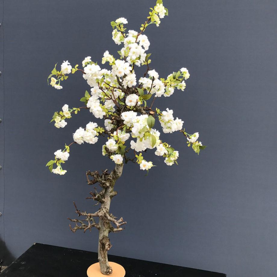 bloesemboom 120cm