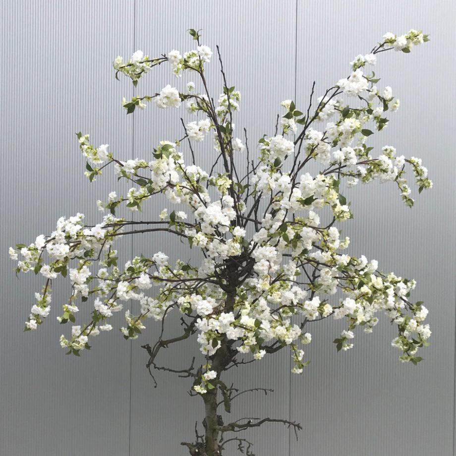 Witte nep bloesemboom