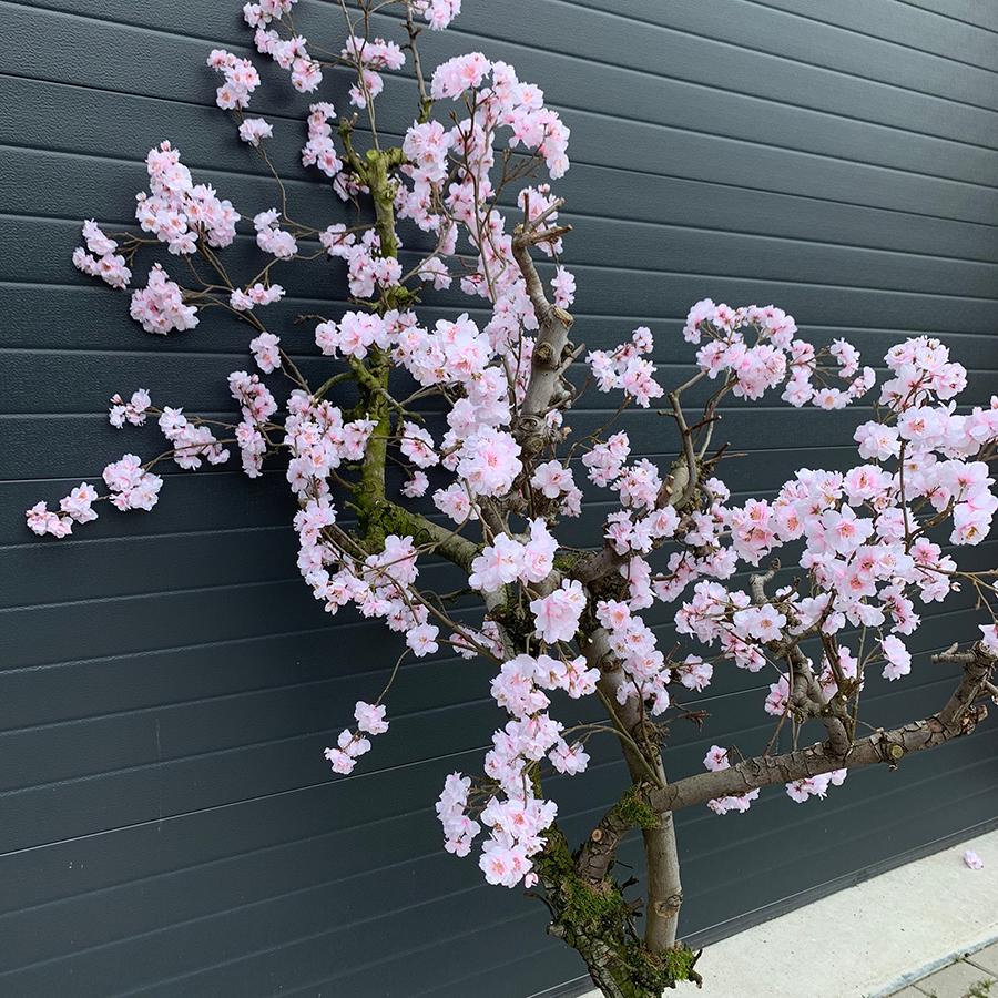 kunst blosemboom