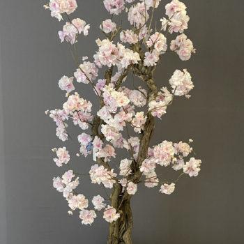 sakura roze