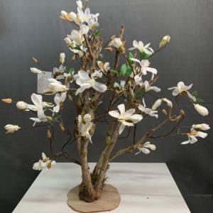 Magnolia boompje kunst