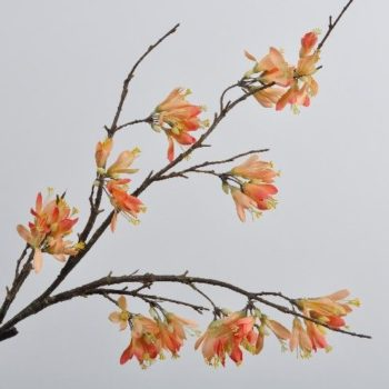 peach kleurige bloesem