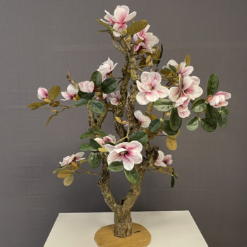 zachtroze Magnolia