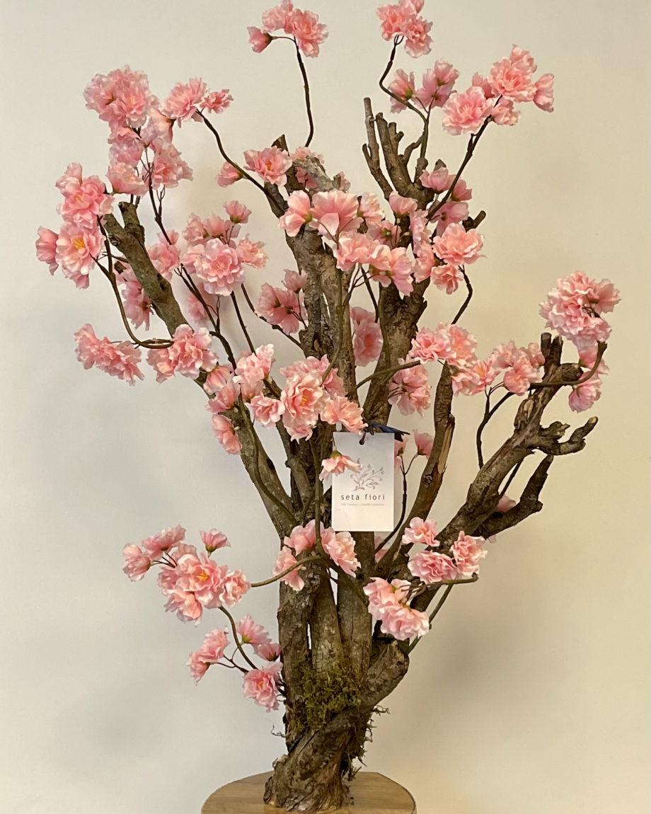 bonsai bloesem